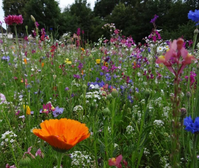 flower_meadow_spring_meadow_flowers_wild_flowers_smock_bloom_blossom_bloom-1150540